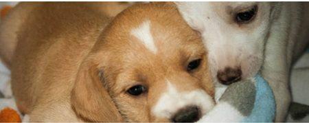 "Animal Shelter Task Force presents plan to move City toward ""no-kill"" status"