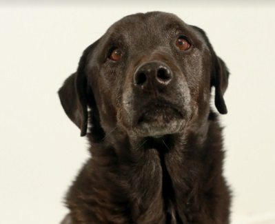 Animal Services Pet of the Week: Meet Wrigley!