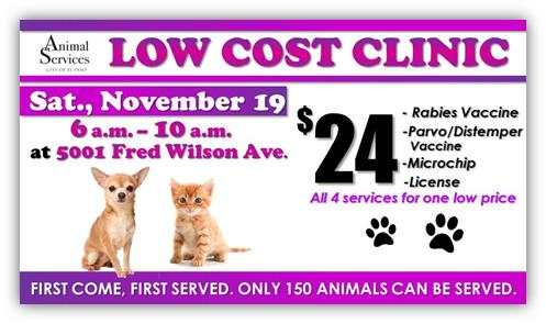 Animal Services to Host Low-Cost Clinic to Fight Parvo, Distemper