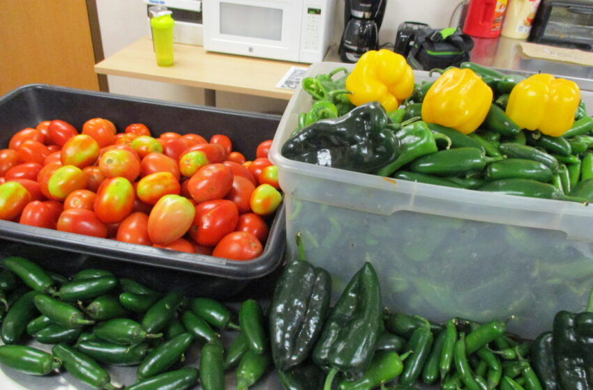 CBP reminds travelers: importation of peppers, tomatoes from Mexico still prohibited