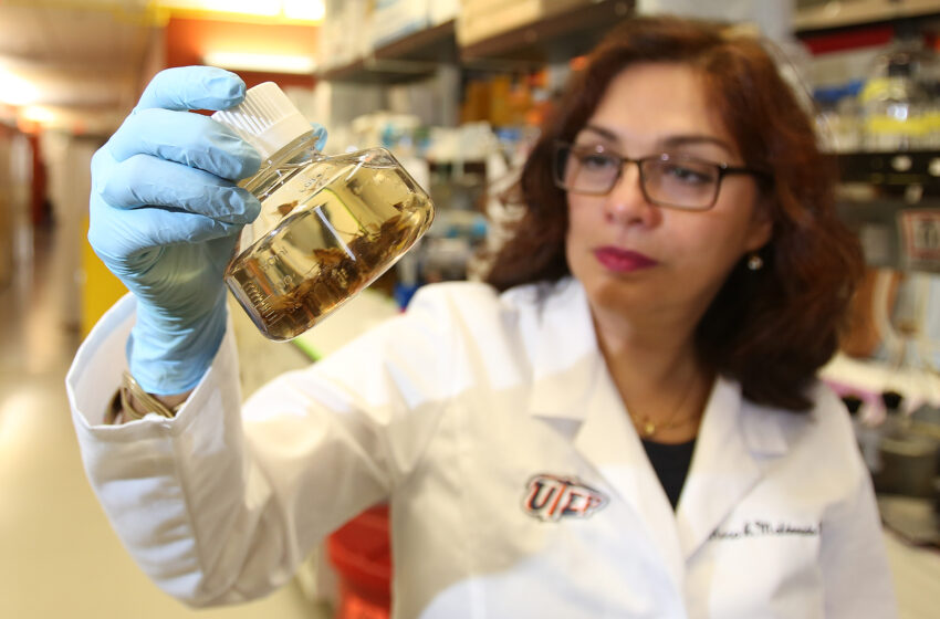 UTEP, TTUHSC El Paso announce Seed Grants, New Initiatives for collaborative health research