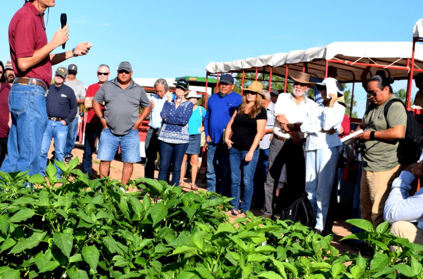 NMSU science centers provide agricultural industry with research-based solutions