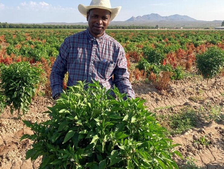 NMSU, Texas A&M AgriLife Research earn grants for pepper production research
