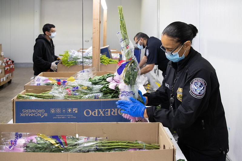 CBP Agriculture Specialists working to ensure Valentine's Day Flowers are disease, pest free