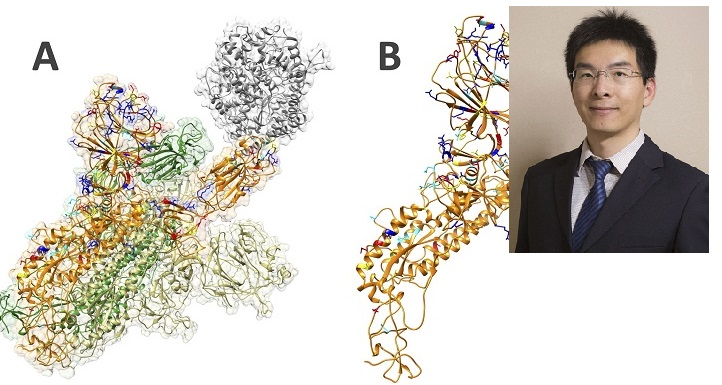 Discoveries by UTEP Researchers help to better understand SARS-CoV-2 Virus