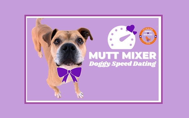 Animal Services Hosts Mutt Mixer, Doggy Speed Dating