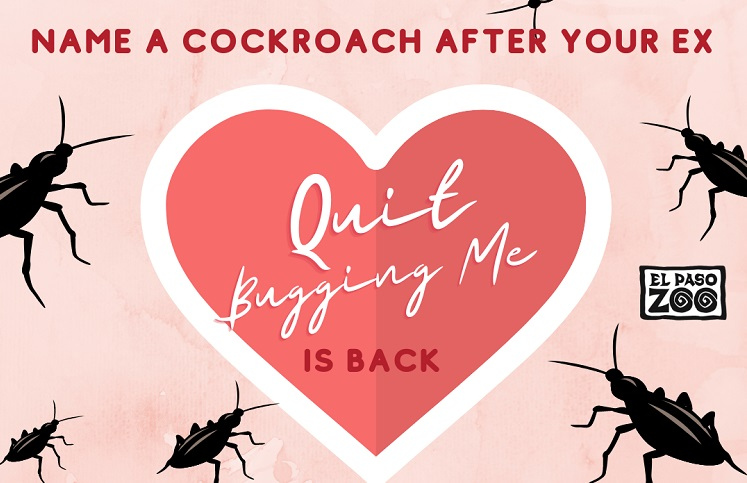 """Quit Bugging Me"" Valentine's Day event returns to the El Paso Zoo"