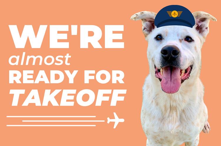 "El Paso Animal Services rolls out new ""Flight Attendant Foster Program"""
