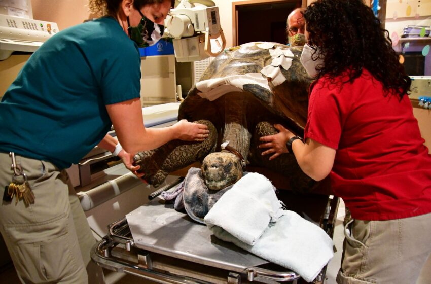 El Paso Zoo partners with Imaging Lab to provide Galapagos Tortoise medical care