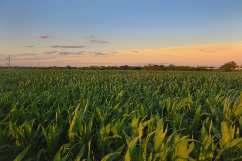 Column: Agriculture is sustainable on Earth Day and every day