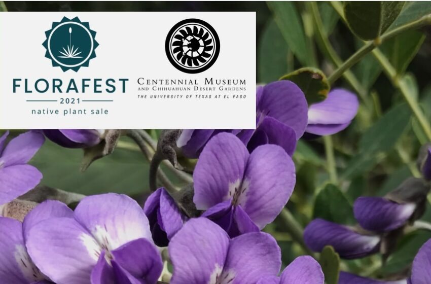 UTEP's 27th FloraFest set for this weekend; Event offers diverse plants for sale