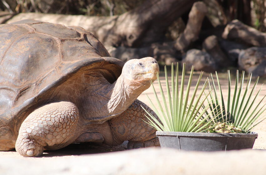El Paso Zoo mourning death of Ralph, the 120-year-old Galapagos Tortoise
