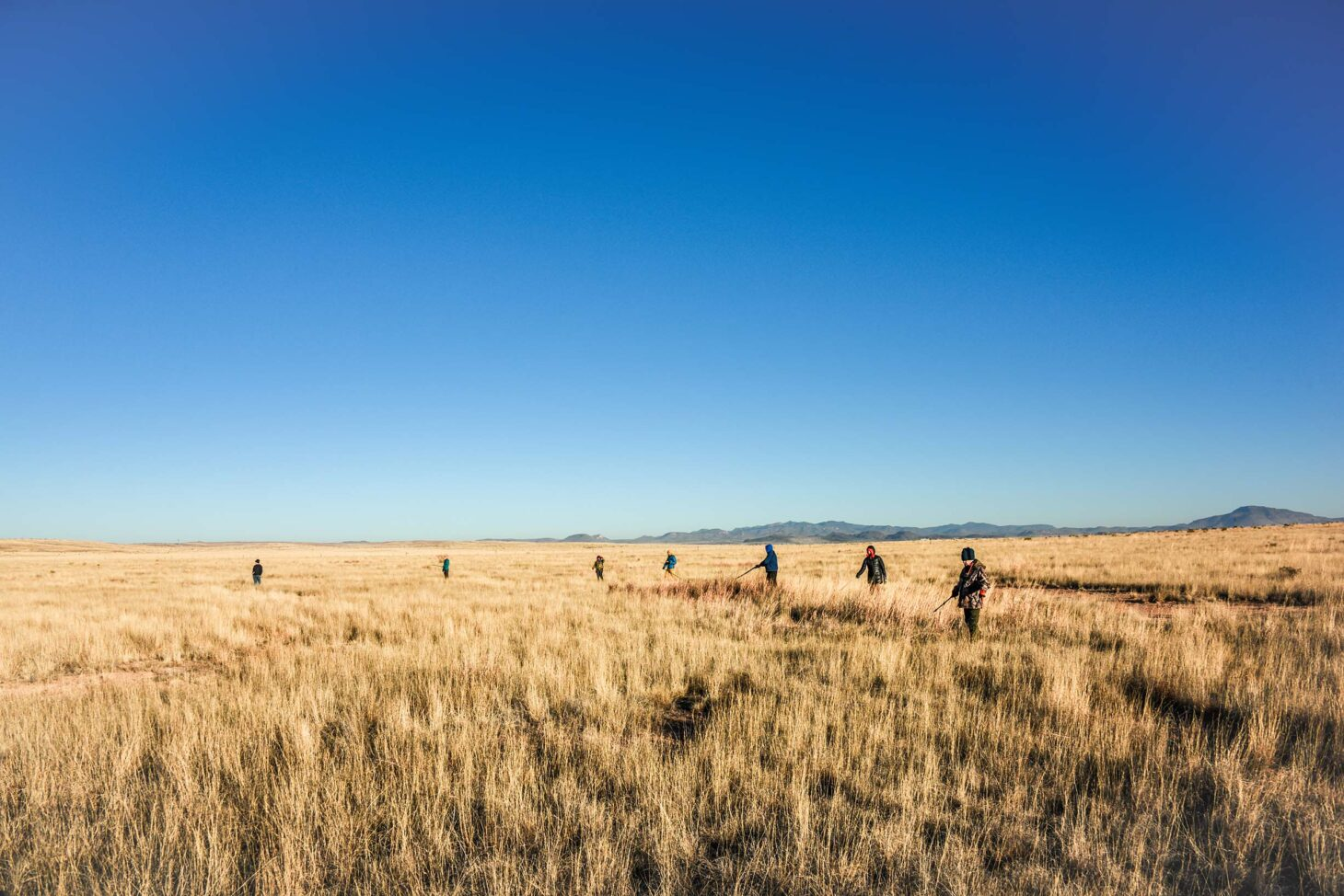 The $180,674 grant will fund brush treatment of approximately 3,500 acres of private land in the Marfa and Marathon grasslands of Texas, which are critical wintering habitat for migratory grassland bird species such as Baird's sparrow, Sprague's pipit, chestnut-collared longspur and McCown's longspur. |  Photo courtesy BRI