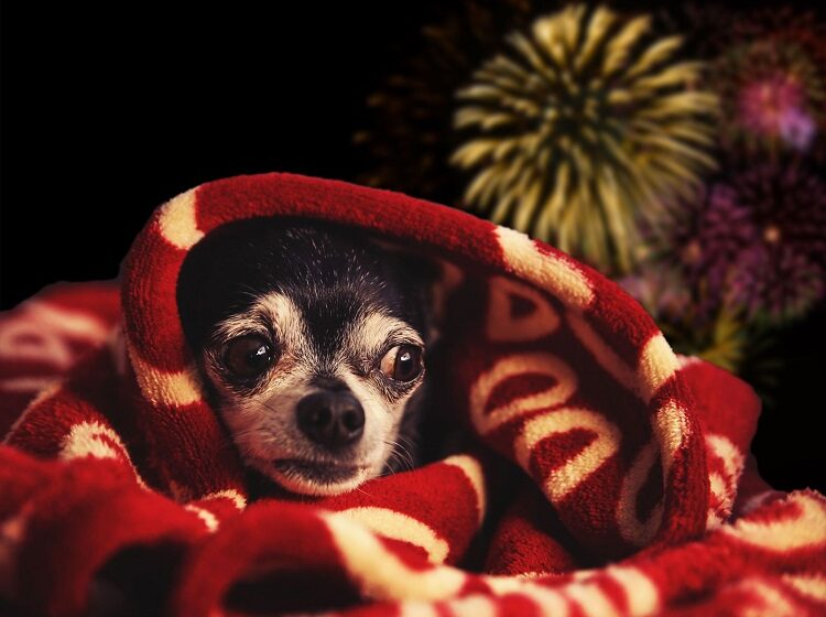 """El Paso, Las Cruces Pet's Barn locations offer free """"Chill Chews"""" for firework-stressed pets"""