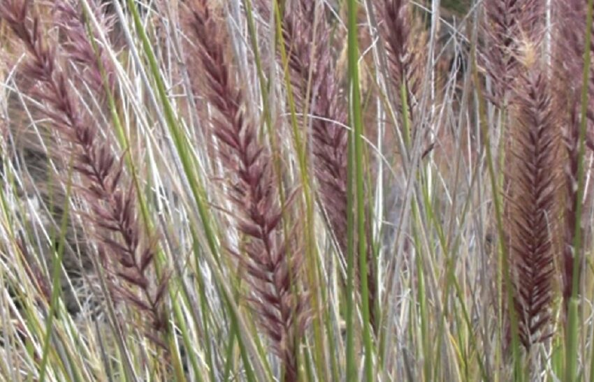 Third edition of NMSU's Extension troublesome weeds publication now available