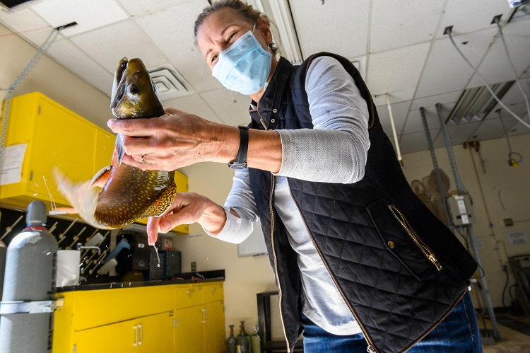 Co-op researchers at NMSU train future scientists while protecting wildlife