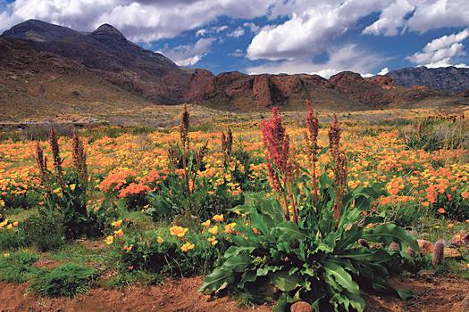 Conservationists promote Castner Range for National Monument Status