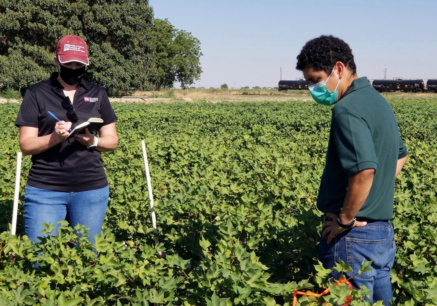 Graduate entomology student Iván Tellez, right, explains his thesis research on bollworm control in an arid microclimate to Leslie Edgar, New Mexico State University College of Agricultural, Consumer and Environmental Sciences associate dean and director of research. Tellez is one of two NMSU graduate students to win awards for their research presentations at the 2021 International Arid Lands Consortium Conference.  |  NMSU photo by Jane Pierce