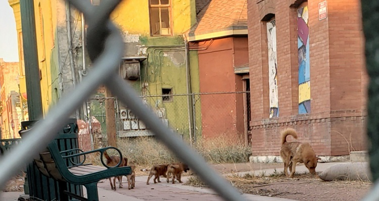 Stray dogs and puppies roam behind the fenced off city-owned property in Duranguito, the site where the city plans to build the Downtown arena.   |  Courtesy of Veronica Carbajal