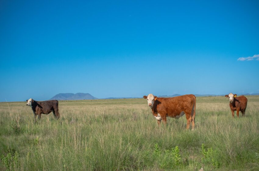 """""""Small Acreage – Big Opportunity"""" Workshop scheduled for West Texas Landowners"""