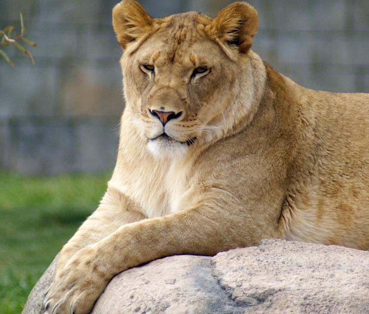 Kalliope | Photo courtesy EP Zoo