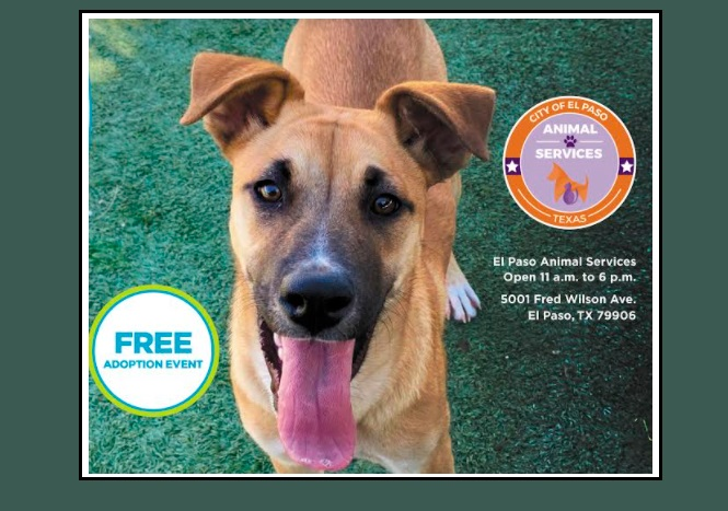 City, Bissell Pet Foundation provide another free 'Empty the Shelters' Event