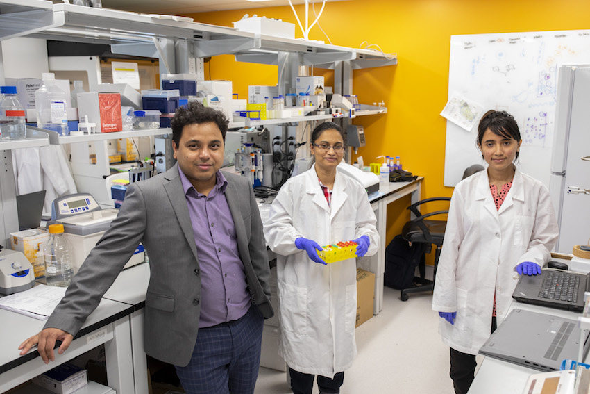 UTEP Assistant Professor Md Nurunnabi, Ph.D., left, and UTEP doctoral students Humayra Afrin, center, and Tamanna Islam, right, are developing a tool to measure heart damage in patients undergoing cancer treatment. Photo: Ivan Pierre Aguirre / UTEP Marketing and Communications