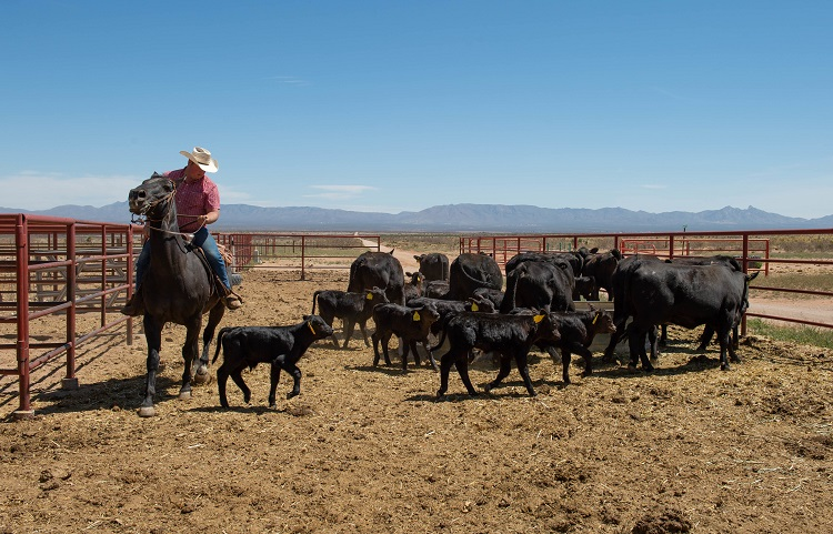 NMSU's Chihuahuan Desert Rangeland Research Center field day to take place in person, online
