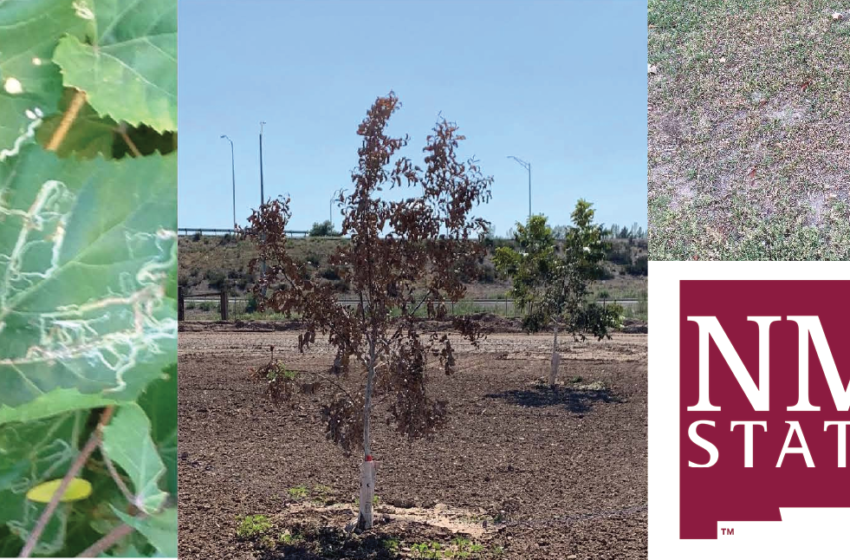 NMSU students to host free in-person plant clinic October 18
